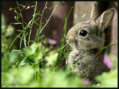 magicalnaturetour:    Bunny on Alert by Tanja Askani (by Realm of Sleep) :)
