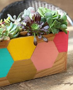 Succulents in geometric painted wooden box planter