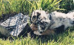 Mit der Panoramabahn – Gondelbahn – auf der Turracher Höhe fährt man bequem zum Nocky Flitzer Start & zur Kindererlebniswelt Nocky's Almzeit. Natürlich kann man/frau zur Bergstation der Panoramabahn auch wandern. Der ganzjährig geöffnete Nocky Flitzer auf der Turracher Höhe bedeutet Spaß für alle. Erlaubt ist die Fahrt mit der Gondelbahn sowie Eintritt in die Kindererlebniswelt! #puppy #funny #dog #hundefreundlich #turrach #cute Goats, Husky, Animals, Dinosaur Garden, Animaux, Animal, Animales, Husky Dog, Goat