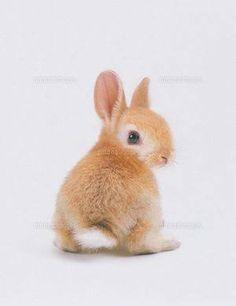 Cute Kawaii Animals, Cute Baby Animals, Animals And Pets, Funny Animals, Cute Baby Bunnies, Bunny Bunny, Beautiful Rabbit, Bunny Cages, Amor Animal