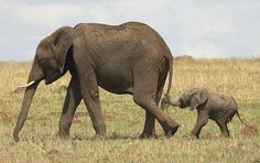Mama and baby.......