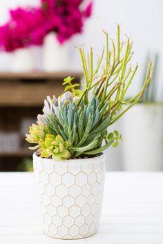 cactus succulents in hex pot Colorful Succulents, Hanging Succulents, Succulents In Containers, Succulents Garden, Planting Flowers, Hanging Planters, Suculentas Interior, Suculentas Diy, Cactus Y Suculentas