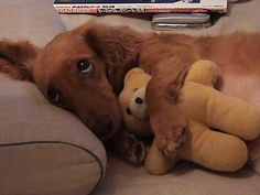 Don't take away my bear. Oh, my goodness. How cute.