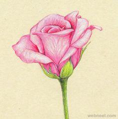 40 Beautiful Flower Drawings and Realistic Color Pencil Drawings   Read full article: http://webneel.com/flower-drawings   more http://webneel.com/daily   Follow us www.pinterest.com/webneel