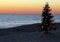 Tropical Christmas :)