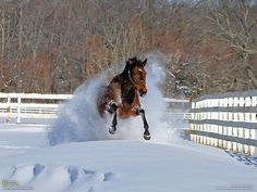 Private Miracle, our thoroughbred racehorse jumps through a snow drift. photo by Mike Quinn Horses In Snow, Wild Horses, All The Pretty Horses, Beautiful Horses, Beautiful Things, Winter Horse, Horse Wallpaper, Free Horses, Dashing Through The Snow