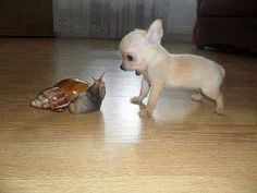 small pup and snail
