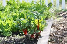 10 tips for gardening during a drought (Photo Credit: Jennifer Baumbach, UCCE Master Gardener Coordinator, Solano County)