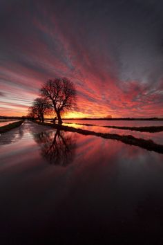 Flooded Somerset (England) by peterspencer49