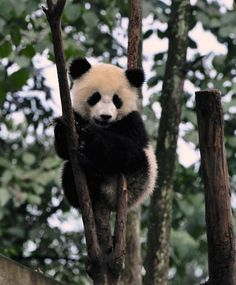 I love animals! Check out my upcoming board: Cuteness Alert!