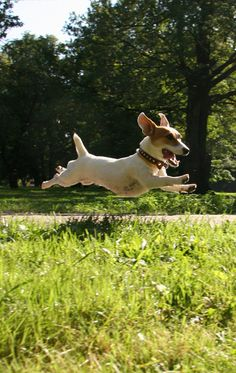 This looks like our JRT