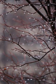 ~Autumn~ Freezing rain on the crabapple tree . . .