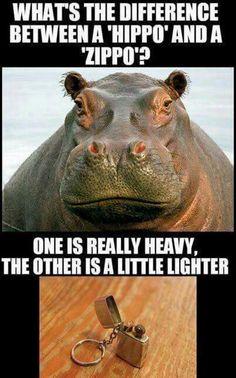 34 Best HIPPO MEMES Images On Pinterest In 2018