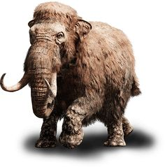 Far Cry Primal - Animals & Beast Mastery   Ubisoft (US) MAMMOTH A huge animal covered in long hair. Can call Elder Mammoth for help. Does not fear fire. HUNTING DIFFICULTY: VERY HARDAWARDS:  MAMMOTH SKIN & XPSPECIAL:  YOU CAN RIDE IT.