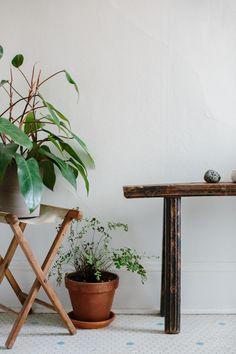 house plants..