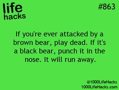 I am glad someone has assisted me with my fear of bears.