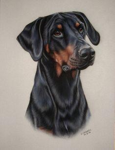 Pastel Pet Portraits - Doberman & Doberman Cross