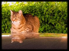 Cat on car Cats, Animals, Gatos, Animales, Animaux, Kitty, Cat, Cats And Kittens, Animal