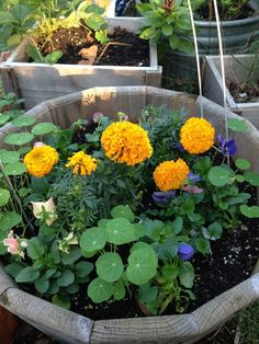 November in my Garden. A pot of fall flowers: marigolds, pansies, nasturtiums New #blog post