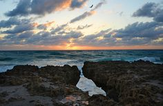 In 1969 Jupiter Island residents donated 73 acres of the island to the Nature Conservancy. Blowing Rocks Preserve runs one mile from north to south and from the Atlantic Ocean on the east to the Indian River Lagoon on the west. Places In Florida, Visit Florida, Florida Vacation, Florida Travel, Vacation Places, Florida Beaches, South Florida, Vero Beach Florida, West Palm Beach