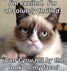 Grumpy cat frowns on your shenanigans. Grumpy cat is not impressed. I wonder if grumpy cat is an engineer. I did find some Grumpy Cat gifs: Grumpy Cat say \ Grumpy Cat Quotes, Meme Grumpy Cat, Funny Cat Memes, Memes Humor, Funny Shit, Funny Cats, Funny Animals, Funniest Animals, Hilarious Quotes
