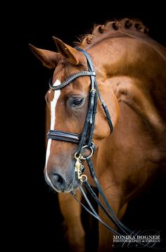 Gorgeous photo of chestnut horse