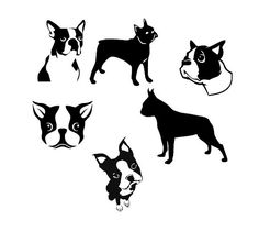 Boston Terrier  SVG and DXF Cut File for by OhThisDigitalFun