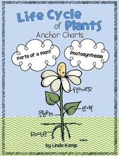 Plant unit anchor charts {FREEBIE}