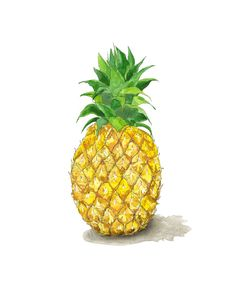 Pineapple Fruit / Piña /welcome symbol for friendship and hospitality Greeting Card / Stationery + Envelope Pineapple Art, Pineapple Watercolor, Food Design, Ink Illustrations, Illustration Art, Pen And Watercolor, Watercolor Ideas, Watercolour Painting, Friendship Symbols
