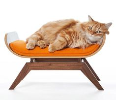Canopy cat lounge for the cat with a taste for modern design - http://cutecatshq.com/cats/canopy-cat-lounge-for-the-cat-with-a-taste-for-modern-design/