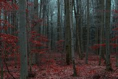.i want woods like this outside my house