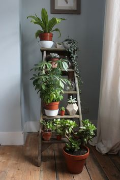 Ladder of plants   Wolves in London