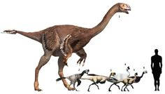 "Gigantoraptor erlianensis (""giant thief"") 2007 Oviraptor philoceratops (""egg thief"") 1924 Conchoraptor gracilis (""conch thief"") 1986 Citipati osmolskae (""after an ancient Sanskrit god"") 2001 Rinchenia mongoliensis (""after paleontologist Rinchen Barsbold"") 2004 Nemegtomaia barsboldi (""Nemegt desert mother"") 2004"