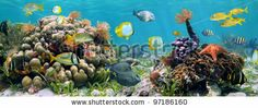 № ~ stock photo : Underwater panorama in a coral reef with colorful sealife