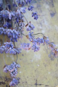 Quella luce magica dei fiori di lavanda...