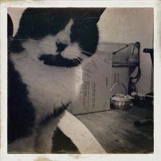 Jasper. #cats #catsofinstagram #catstagram