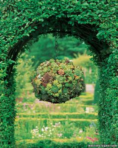 A mix of sempervivum in a hanging ball planter.