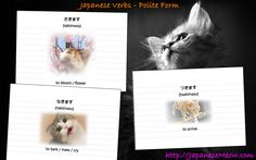 Japanese verbs in the Polite Form - sakimasu, nakimasu, tsukimasu.  Study these flashcards at JapaneseMeow.com