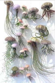 Air Plant Display, Plant Decor, Air Plants, Indoor Plants, Succulents Garden, Planting Flowers, Garden Art, Garden Design, Deco Nature