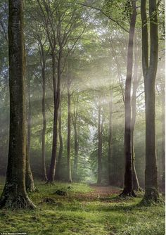 Breathtaking beauty of Britain: Landscape photos taken aroun.- Breathtaking beauty of Britain: Landscape photos taken around the UK Buckholt Wood, Cranham, Gloucestershire, England, shot by Rob Wolstenholme -