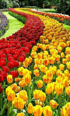 Most Beautiful Gardens, Beautiful Flowers Garden, Pretty Flowers, Amazing Gardens, Beautiful Nature Pictures, Amazing Nature, Beautiful Landscapes, Tulips Flowers, Flowers Nature