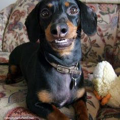 I'd say I have a pretty good smile, don't you? Keep brushin' ~ Crusoe ~
