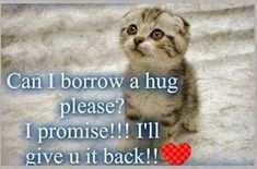 can I borrow a hug quotes cute quote hug cat adorable kitten