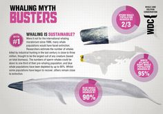The truth about whaling and the devastating impact it had on whale populations. Find out more at whales.org