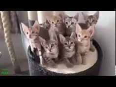 Leuke kattenfilmpjes (Funny Cats!) - YouTube