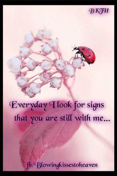 Ladybug from Heaven