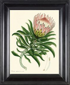 BOTANICAL PRINT ANDREWS 8x10 Botanical Art Print 1 Antique White Pink Spring Blossoms Blooming Fruit Tropical Cactus Garden