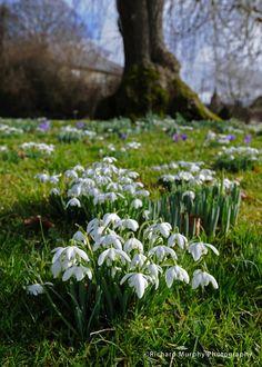 Altamont Gardens, Tullow, Co.Carlow, Ireland.