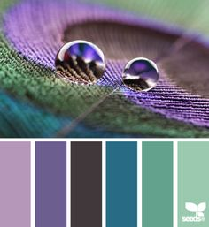Peacock colors - purple, navy, seafoam green, teal, and lavender. #designseeds