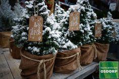 Mini kerstboompjes zijn verkrijgbaar in verschillende soorten en maten en staan natuurlijk erg leuk op je dinertafel! Mini, Ladder Decor, Burlap, Reusable Tote Bags, Home Decor, Decoration Home, Hessian Fabric, Room Decor, Home Interior Design